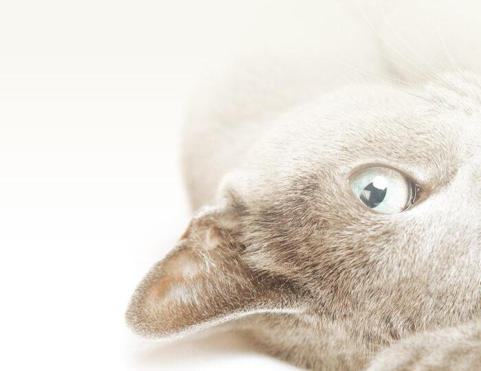 slide_cat.jpg